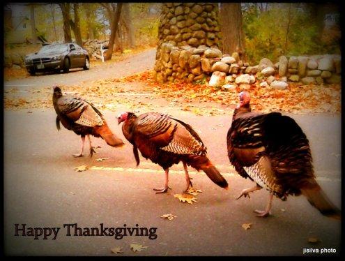 rockport turkeys