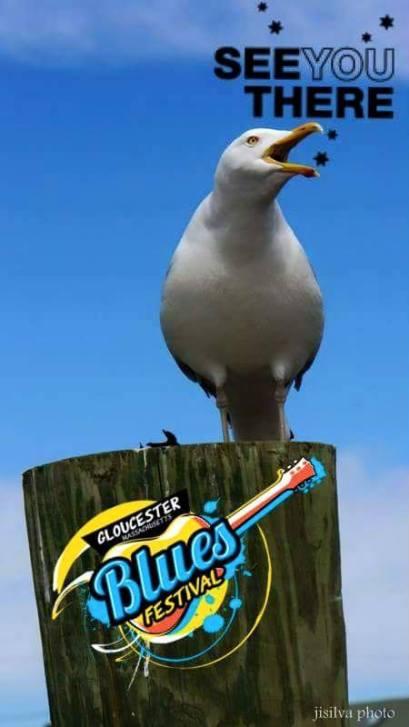 gbf gull